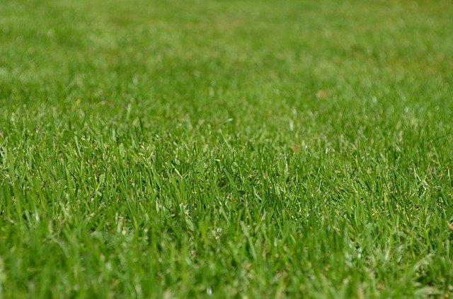 posekaný trávník