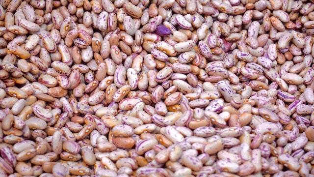 semena fazolí